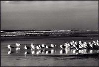 Seagulls awaiting Sunset<br />
