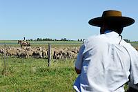 URUGUAY Estancia La Magdalena bei Salto, 18.ooo Hektar Weideland fuer 12.000 Rinder und 18.000 Schafe und 5.000 Hektar Ackerland fuer Reis, Gensoja und Zuckerhirse, Gauchos auf Pferd treiben eine Schafherde  / .URUGUAY Estancia La Magdalena near Salto, 18.000 hectares farm, herd of Merino sheps and shepherd on horse