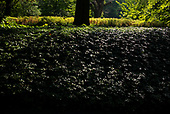 Brooklyn, New York<br /> July 31, 2020<br /> <br /> Brooklyn Botanical Garden, opens after 4 months to advanced ticketed groups. <br /> <br /> Closed to the coronavirus pandemic, that took thousands of NY lives.