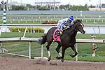 January 24, 2015:  Upstart with jockey Jose Ortiz on board wins the $400K Holy Bull Stakes at  Gulfstream Park in Hallandale Beach, Florida. Liz Lamont/ESW/CSM