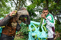 ARMENIA - COLOMBIA, 26-05-2021: Arnold le ayuda a descargar un racimo de plátano a Diego, dependiendo del numero de dedos que tenga el racimo, el precio de este se encuentra entre los COP 13.300 y 15.000. A más de un mes del inicio del Paro Nacional, los campesinos han tenido que reinventar la forma para mantener sus cultivos y criaderos activos para minimizar las pérdidas por los bloqueos que aún se mantienen en las vías. Según cifras del Ministerio de Hacienda, las pérdidas diarias están en un monto de $480.000 millones de pesos colombianos, lo cual sumando la totalidad de los días del Paro Nacional, suman un total de $10,8 billones de pesos colombianos. / Arnold helps Diego unload a bunch of bananas, depending on the number of fingers the bunch has, the price of the bunch is between COP 13,300 and 15,000. More than a month after the beginning of the National Strike, farmers have had to reinvent the way to keep their crops and farms active in order to minimize losses due to the blockades that still remain on the roads. According to figures from the Ministry of Finance, daily losses are in the amount of $480,000 million Colombian pesos, which adding the total number of days of the National Strike, add up to a total of $10.8 billion Colombian pesos. Photo: VizzorImage / Santiago Castro / Cont
