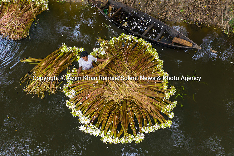 "Hundreds of aquatic water liles are collected by hand from a river in Bangladesh.<br /> <br /> The beautiful plants are the country's national flower, which blooms annualy in almost every body of water.<br /> <br /> The images were captured by Azim Khan Ronnie.  Azim said, ""once harvested, the water lilies are transported to local markets to be sold as vegetables.  One set of consists of about two dozen sticks, which sells for just 20 pence.  On average, 1200 sticks can be collected in a single day.  The workers in the boats collect the lilies from 4am to 9am, bunching them up to carry back in their boats.""<br /> <br /> Please byline: Azim Khan Ronnie/Solent News<br /> <br /> © Azim Khan Ronnie/Solent News & Photo Agency<br /> UK +44 (0) 2380 458800"