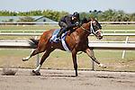 Fasig-Tipton Florida Sale,Under Tack Show. Palm Meadows Florida 03-23-2012