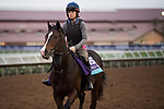 DEL MAR, CA - NOVEMBER 01: Beckford, owned by Newtown Anner Stud Farm, Ltd. and trained by Gordon Elliott, exercises in preparation for Breeders' Cup Juvenile Turf during morning workouts at Del Mar Thoroughbred Club on November 1, 2017 in Del Mar, California. (Photo by Michael McInally/Eclipse Sportswire/Breeders Cup)