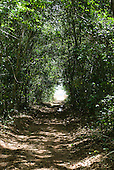Xingu Indigenous Park, Mato Grosso State, Brazil. Aldeia Aweti. Pathway to the river through the cerrados forest.