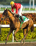 30 January 2010: Amazing and jockey Elvis Trujillo after the Sunshine Millions Distaff Stakes at Gulfstream Park in Hallandale Beach, FL.