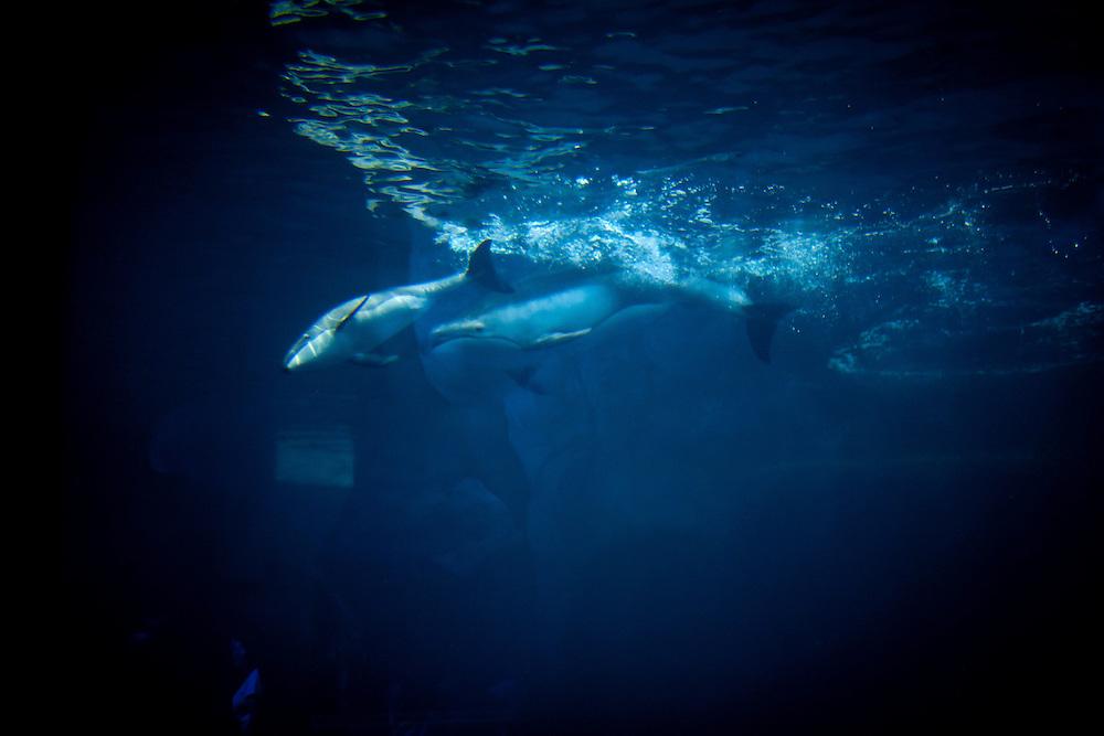 Shedd Aquarium – Chicago, Illinois (Photo by James Brosher)