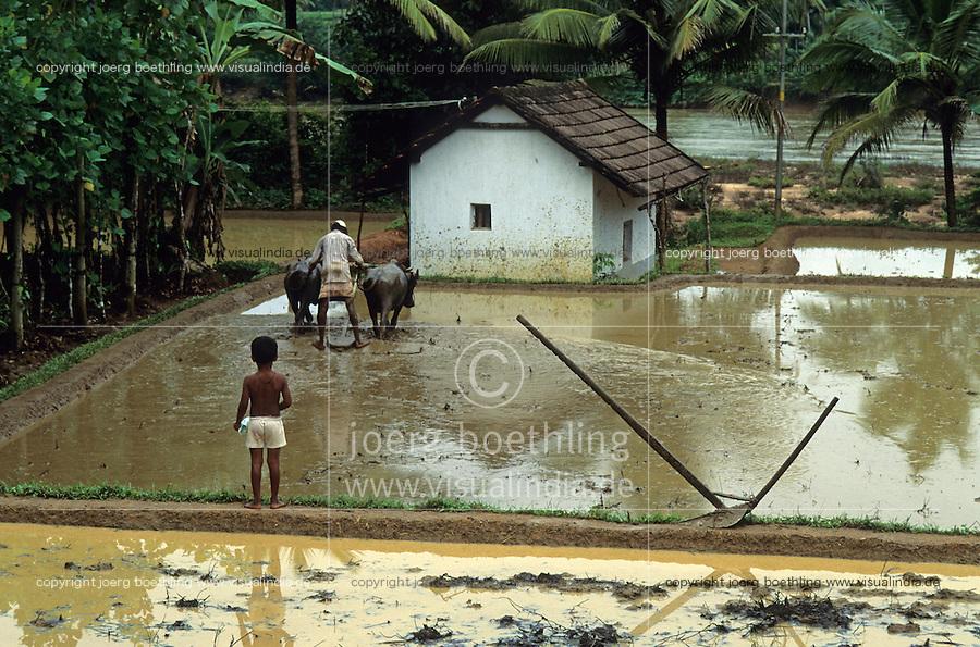 INDIA Karnataka Taccode, farmer ploough paddy field with buffalo at a farm near Mangalore / INDIEN Taccode, Bauern pfluegen Reisfelder mit Wasserbueffeln