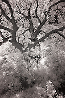 Fort Worth Botanical Garden in infrared