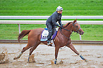 October 28, 2015 :   Rated R Superstar, trained by Kenneth G. McPeek and owned by Radar Racing LLC, exercises in preparation for the Sentient Jet Breeders' Cup Juvenile at Keeneland Race Track in Lexington, Kentucky on October 28, 2015. Scott Serio/ESW/CSM