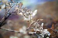 Macro / Details in Nature.Stock images for license - no use without permission