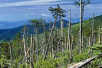 Acid Rain Damage, Forest Decline, Mt. Mitchell, NC