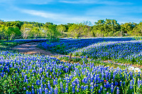 Texas Bluebonnets in Hill Country - We captured these wonderful texas bluebonnets west of Marble Falls in the Texas hill country. We pretty much thought that the bluebonnets were done for the season last year when a rain a few days before brought out this wonderful ranch full of bluebonnets.  Now we almost didn't make the trip but we decided one more trip into the texas hill country and we were lucky we found this wonderful field.  The bluebonnets were thick with a few poppies and indian paintbrush but it was mostly texas bluebonnets with a back drop of mesquite trees which is what the hill country has a lot of.  To see more pictures of bluebonnets please visit our web sites. beecreekphoto.com or beecreekphotography.com