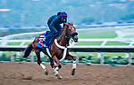 DEL MAR, CA - OCTOBER 28: Mind Your Biscuits, owned by J Stables, Head of Plains Partners LLC, All American Horses LLC, Daniel Summers & Michael E. Kisper and trained by Chad Summers, exercises in preparation for the Breeders' Cup Las Vegas Dirt Mile at Del Mar Thoroughbred Club on October 28, 2017 in Del Mar, California. (Photo by Scott Serio/Eclipse Sportswire/Breeders Cup)