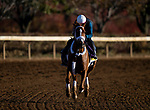 November 4, 2020:Point Of Honor, trained by trainer George Weaver, exercises in preparation for the Breeders' Cup Distaff at Keeneland Racetrack in Lexington, Kentucky on November 4, 2020. Alex Evers/Eclipse Sportswire/Breeders Cup