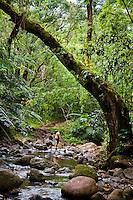 A couple of tourists hiking through a jungle to Maunawilil Falls