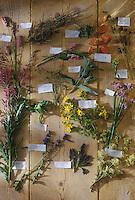 Europe/France/Rhône-Alpes/74/Haute-Savoie/Annecy:  l'herbier sauvage  de Marc Veyrat