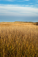 Seagrass and dune landscape backing the Cape Cod National Seashore, Cape Cod, MA, USA