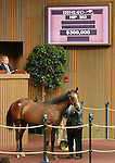 September 10, 2014: Hip #382 War Front - Wend colt consigned by Claiborne Farm sold for $300,000 at the Keeneland September Yearling Sale.   Candice Chavez/ESW/CSM