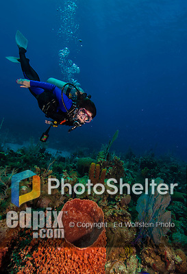 10 July 2013: SCUBA diver Sally Herschorn glides over a Barrel Sponge at the Bear's Paw Reef off the North Shore of Grand Cayman Island. Located in the British West Indies in the  Caribbean, the Cayman Islands are renowned for excellent scuba diving, snorkeling, beaches and banking.  Mandatory Credit: Ed Wolfstein Photo
