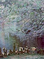 Ducks at Swan Lake, infrared