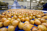 Onions on a packhouse roller table