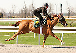 01 April 2010.  Hip #p Speightstown filly.