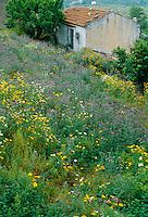 Wildflower meadow behind a village house in Maheri, Crete, May 2005