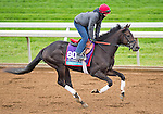 October 26, 2015 :  Conquest Daddyo, trained by Mark E. Casse and owned by Conquest Stables LLC (Ernie Semersky & Dory Newel), exercises in preparation for the Breeders' Cup Juvenile Turf at Keeneland Race Track in Lexington, Kentucky on October 26, 2015. Scott Serio/ESW/CSM