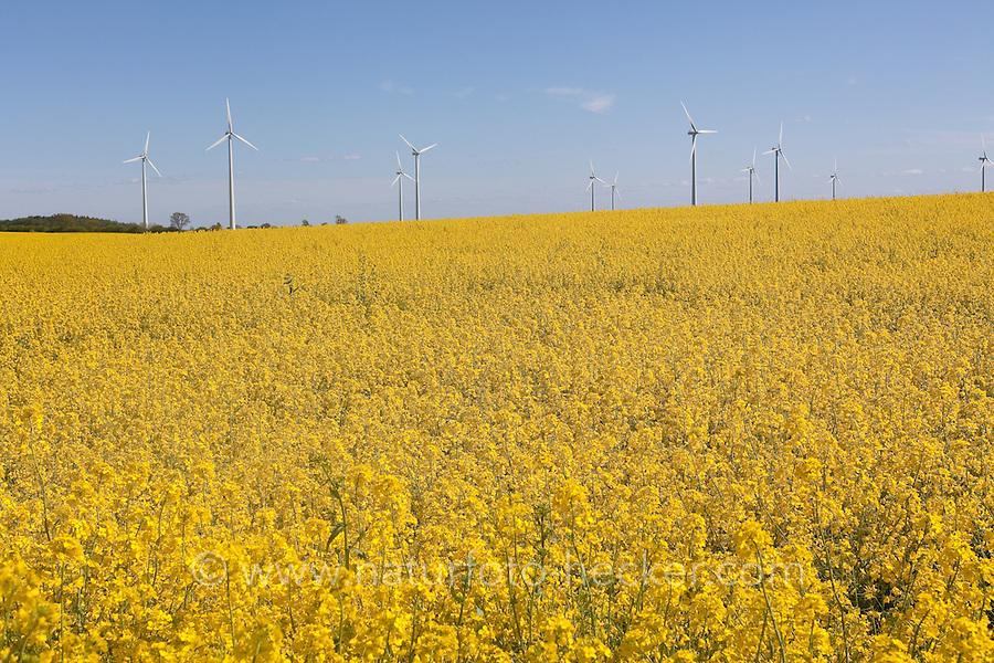 Raps, Rapsfeld, Rapsacker, Acker, Raps-Anbau, Rapsanbau, Brassica napus, Oilseed Rape und Windenergieanlage, Windrad, Windräder im Hintergrund, regenerative Energie