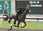 April 03, 2014: Hip 56 Zensational - Tazmon consigned by Murray Smith worked 1/4 in 21:1.  Candice Chavez/ESW/CSM