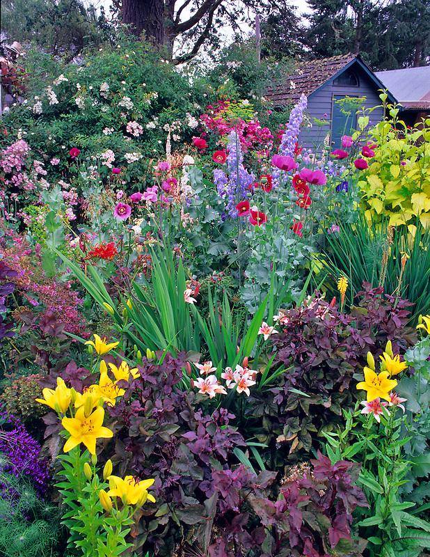 Flower gardens at Northwest Garden Nursery. Eugene, Oregon.