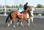 09 October 17: Champs Elysees (no. 1), ridden by Garrett Gomez and trained by Robert Frankel, wins the grade 1 Canadian International Stakes for three year olds and upward at Woodbine Racetrack in Rexdale, Ontario.