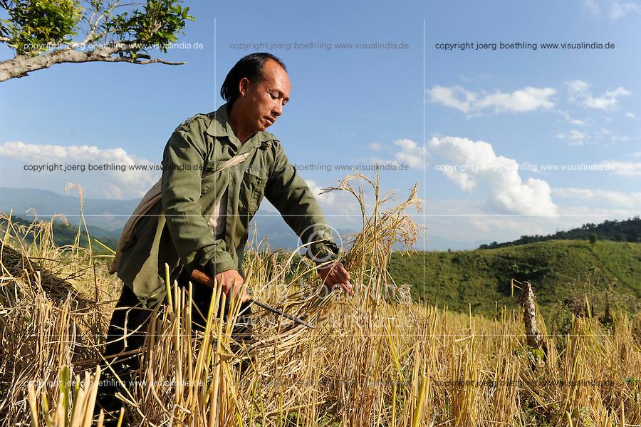 Asien LAOS Provinz Oudomxay , Ethnie Khmu , auf den Bergen wird Brandrodung fuer Subsistenzlandwirtschaft betrieben, Anbau von Hochland Reissorten , die Ertraege sind sehr gering 1-2 Tonnen pro Hektar , Bauer erntet Reis   .Asia LAOS province Oudomxay , village Laksaosong, ethnic group Khmu, rice farming in mountains, farmer harvest paddy