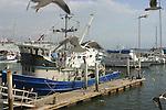 Fishing boats and cruise ships clutter the Ensenada wharf