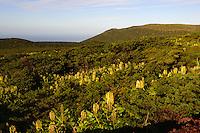 bei den Caldeiren auf der Insel Flores, Azoren, Portugal