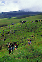 Hikers on Kohala Mountain, near Waimea. Big Island of Hawaii