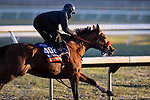 Lady Prancealot, trained by Richard Baltas, works in preparation for the Breeders' Cup Filly & Mare Turf at Keeneland 10.31.20.
