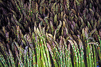 Large piles of green asparagus bundles bright color, green, vegetables, garden, fresh, tasty, flavorful, summer, spring, gray green, asparagus tips, stalks, asperagus, pink and green, farmer's market, agriculture, farming, produce.