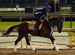 October 30, 2018 : Gunnevera at Churchill Downs on October 30, 2018  in Louisville, Kentucky in preparation for the Breeders' Cup Classic. Mary M. Meek/ESW/CSM