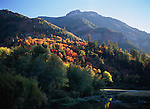 Evening light illuminates the fall color adorning trees in Logan Canyon, Utah.