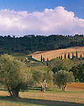 "Tuscany, Italy<br /> Rolling forested hills and fields of the Val d""Orcia with scattered olive and cypress trees near the village of Castelnuovo dell'Abate"