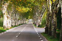 A tree lined country road allee with plane trees platanes. A red car on the side of the road. Saint Remy Rémy de Provence, Bouches du Rhone, France, Europe