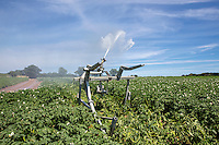 Irrigating potatoes with a raingun - Norfolk, July