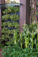 Vertical Growing of Vegetables