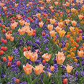 Gisela, FLOWERS, BLUMEN, FLORES, photos+++++,DTGK1932,#f#
