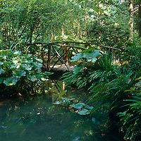A simple wooden bridge spans a brook surrounded by lush green vegetation