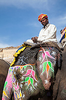 Amber (or Amer) Palace, near Jaipur, Rajasthan, India.  Colorfully-decorated  Elephants take visitors up the steep path to the palace.