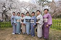 Japan, Kyoto. Japan, Kyoto. Women in kimonos enjoying the cherry blossoms in Kyoto Gyoen National Garden. Model released