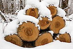Wood pile covered with snow